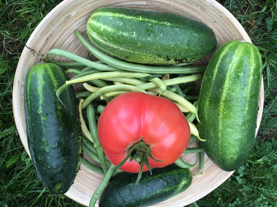 bewusst essen, teilen, selbstversorgen